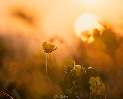 Midnight Flowers - Friday Photo #235