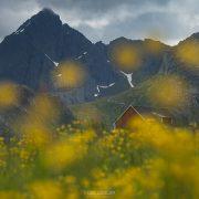 Summer Flowers - Friday Photo #241