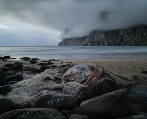 Kvalvika Whale - Friday Photo #292