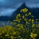 Midnight Flowers - Friday Photo #340