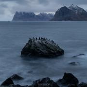 Cormorant Rock - Friday Photo #356