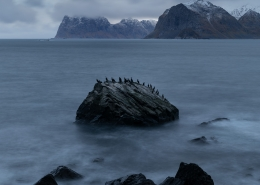Cormorant Rock - Friday Photo #356