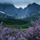 Purple Heather - Friday Photo #402