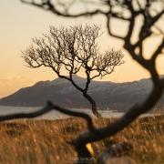 Tree - Friday Photo #408
