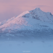 Winter Fog - Friday Photo #427